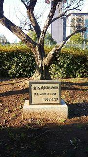 梅の木石碑.jpg